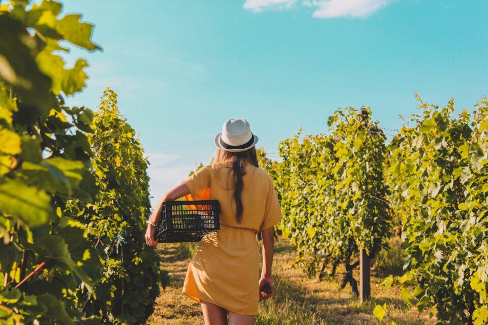 Vertriebspersönlichkeit am Weinmarkt